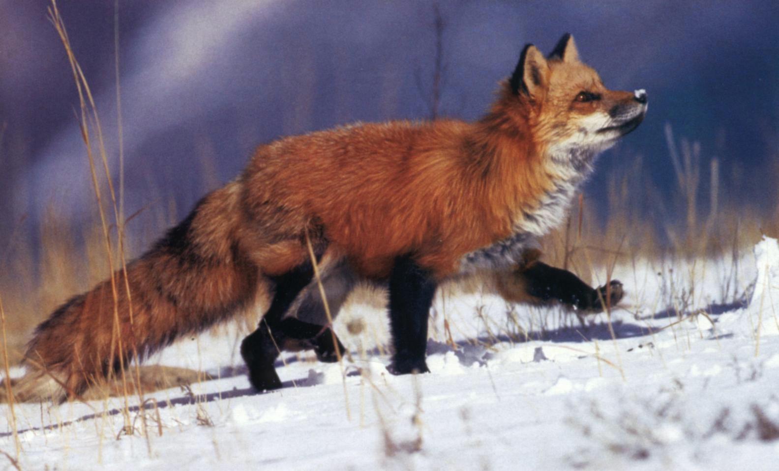 путевые заметки лиса, странствующего по мирам. ввиду отсутствия лиса не обновляются